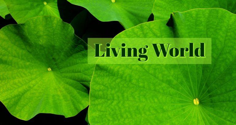 NEET Coaching : Biology- Living World