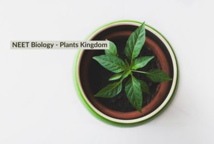 NEET Coaching : Biology – Plant Kingdom