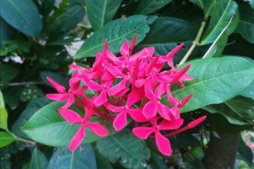 Flowers : പൂക്കള് : Gallery